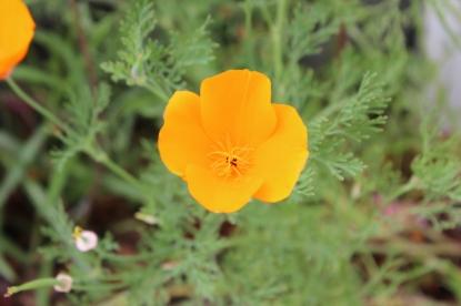 New Zealand Flower